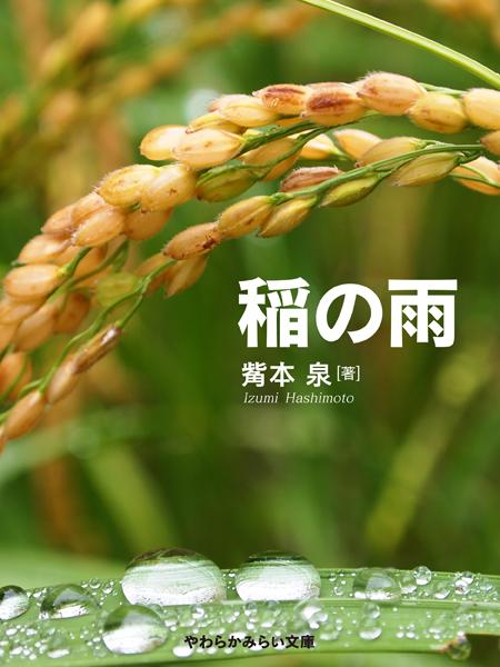 稲の雨.jpg